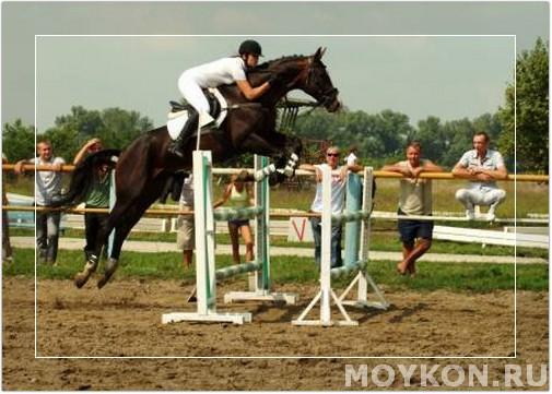 бурая лошадь на конкуре