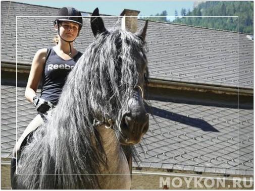 Норикийский конь бурой масти
