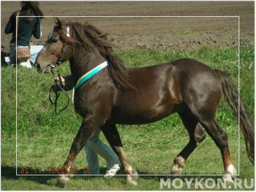 фото бурой лошади в движении