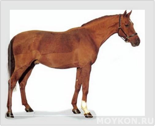 Рыжий конь в поле