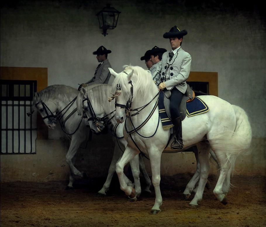Андалузская порода лошадей - фото 5