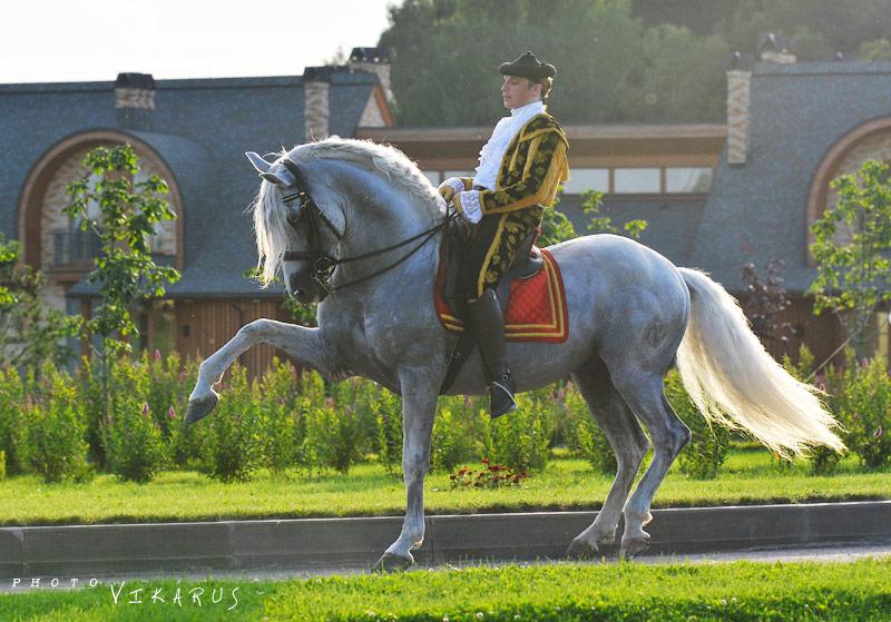 Андалузская порода лошадей - фото 6