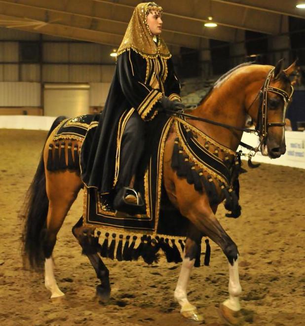 Аристократичный арабский конь