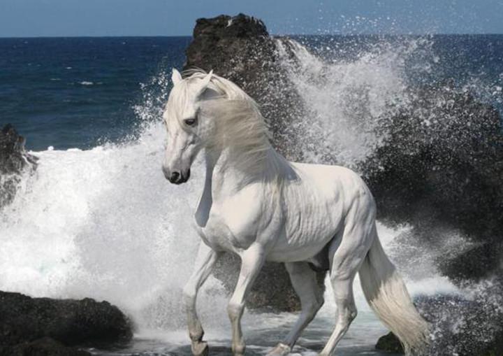 Красивый араб у воды