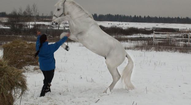 Орловская рысистая зимой