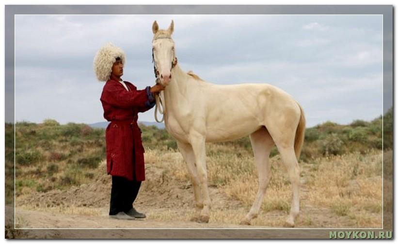 Легенда об ахалтекинцах