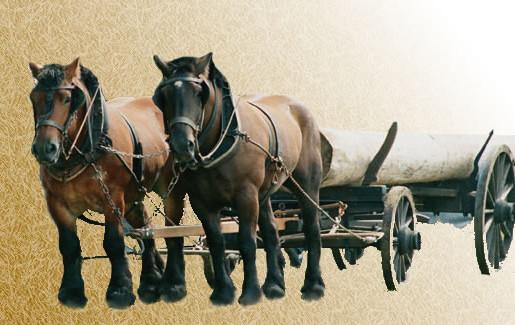 арденская лошадь3