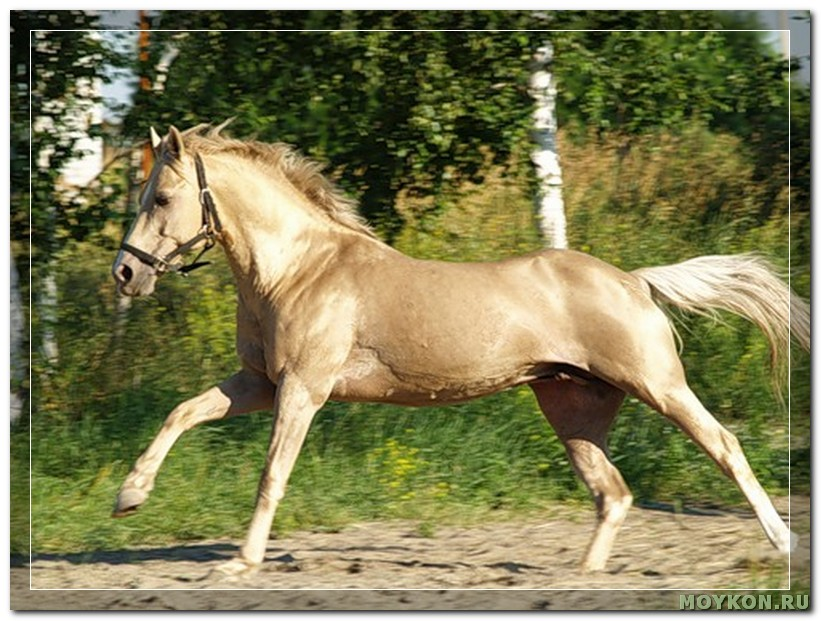 Лошади кински