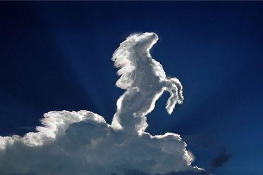 Легенда об арабской лошади