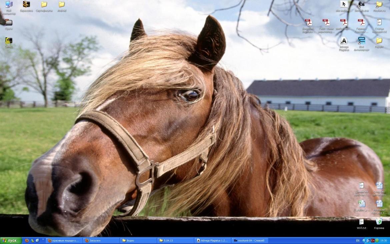 Скачать обои лошади
