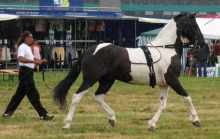 Вороно пегий конь