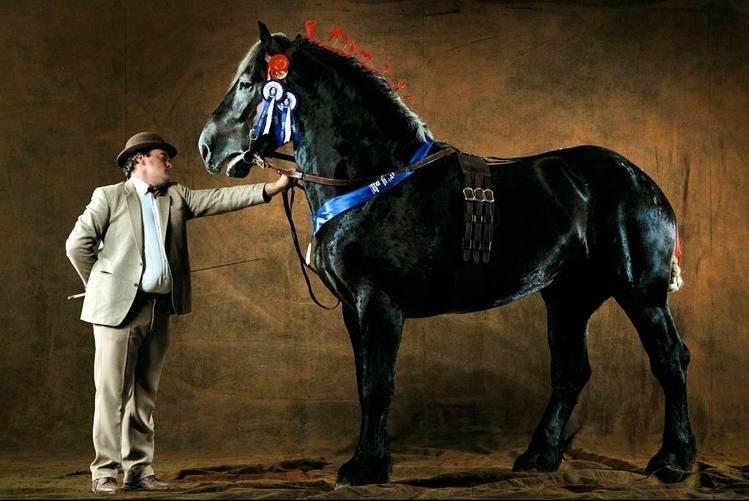 Лошади першероны