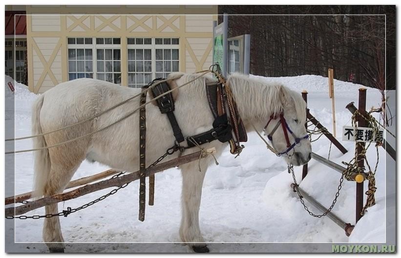 Пони Хоккайдо