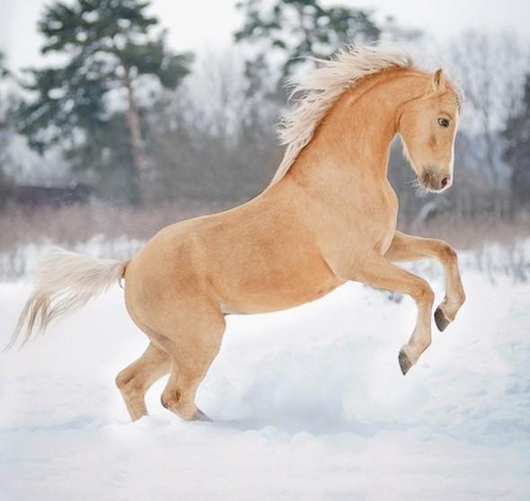 Соловой масти конь зимой