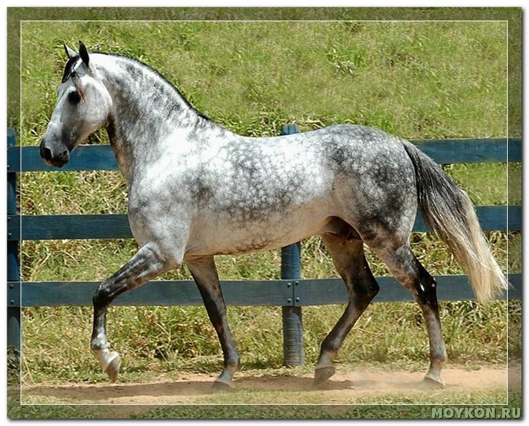 Лошадь в яблоках