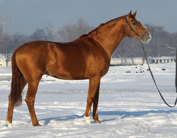 Буденновская лошадь 2