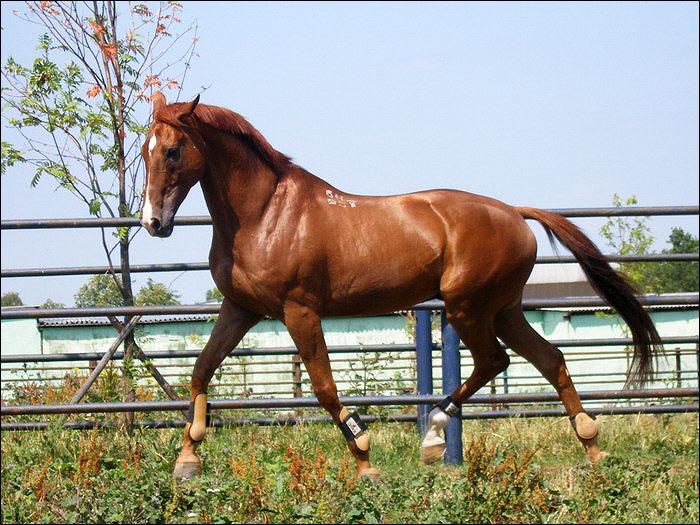 Буденновская лошадь 3