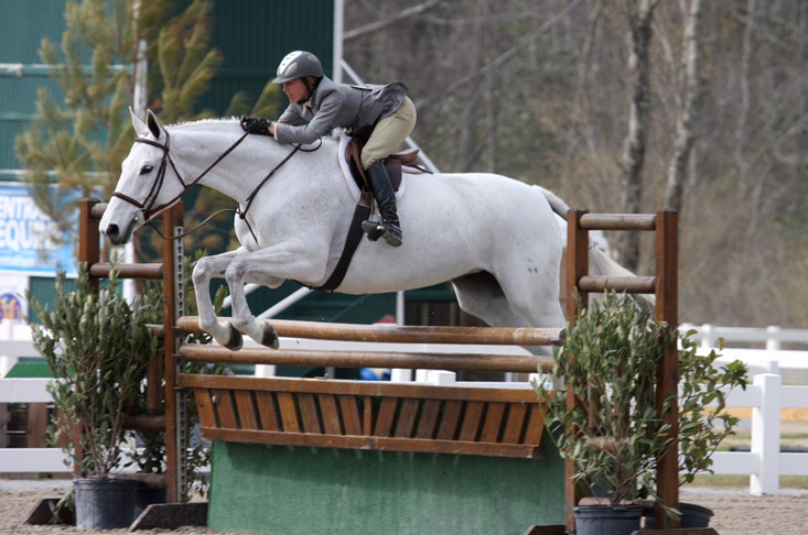Лошадь гунтер в конкуре