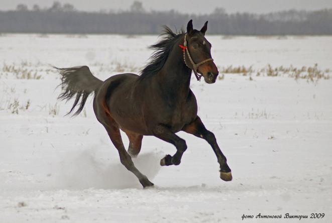 Русский рысак зимой 1