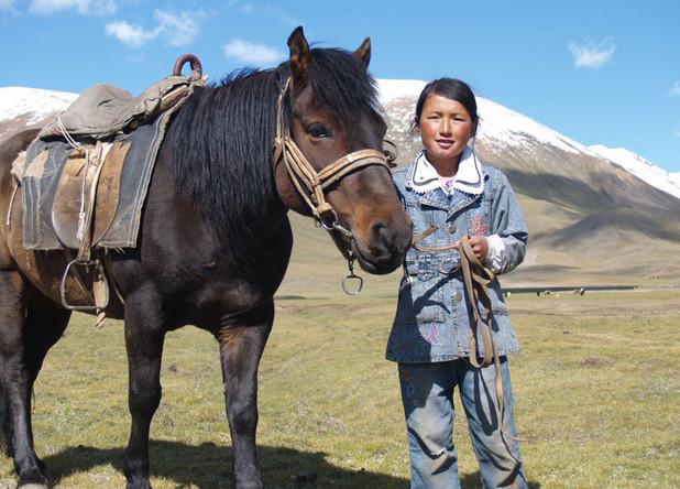 Монгольская лошадь 2