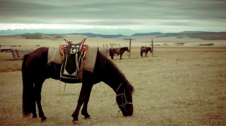 Монгольская лошадь 4
