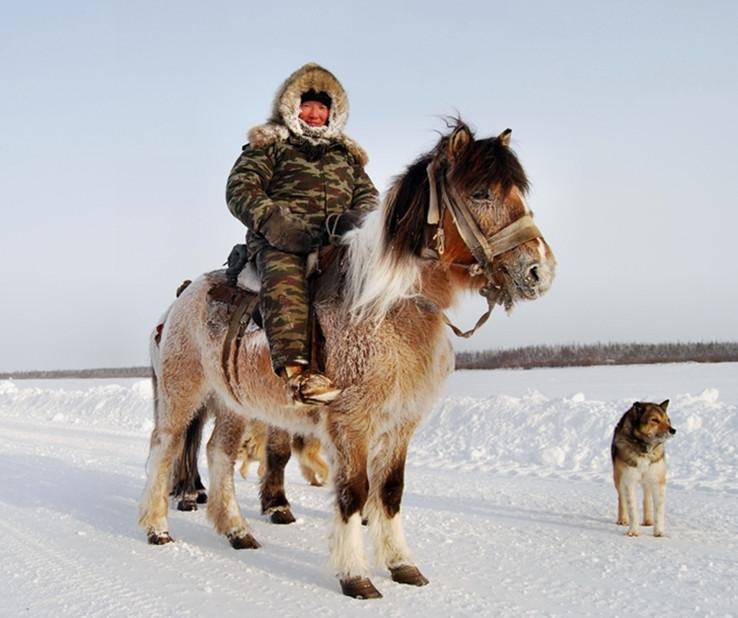 Якутский конь