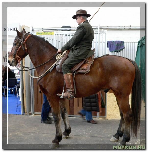 Маремманская лошадь