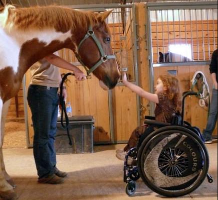 Иппотерапия для инвалидов