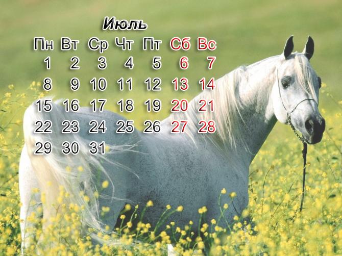 Календарь с лошадьми на июль 2013