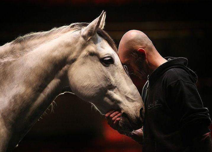 Единение с лошадью