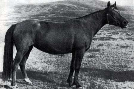Новокиргизская порода