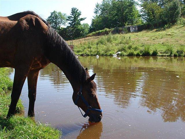 Поение лошади