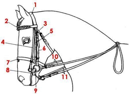 Уздечка для лошади устройство