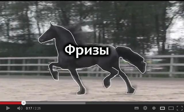 Видео фризы