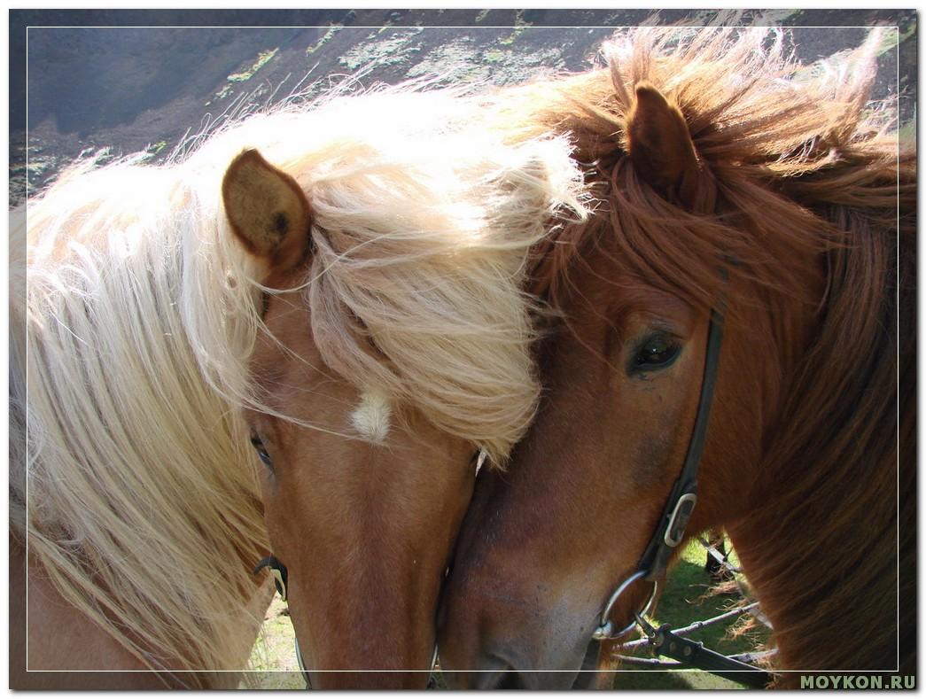 Дикие лошадки
