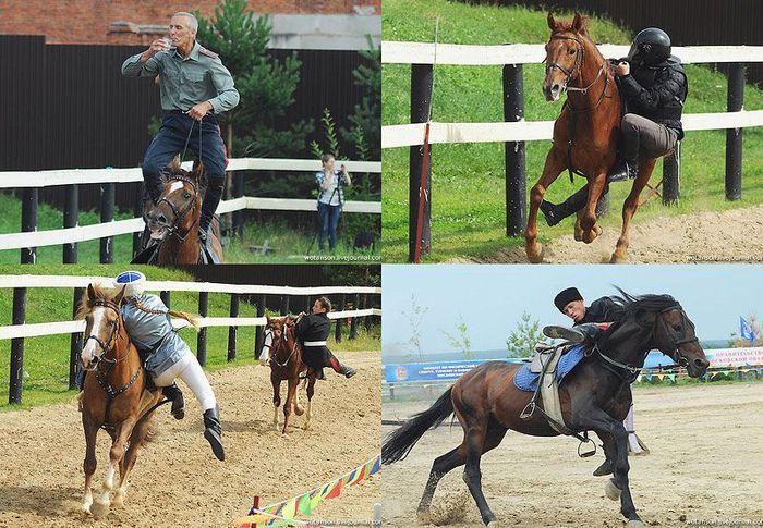 Неолимпийские виды конного спорта