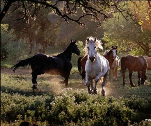 Факты о диких лошадях