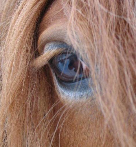 Факты о глазах лошади
