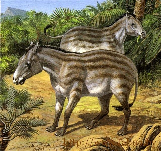 Интересные факты о лошадях: Эогипус