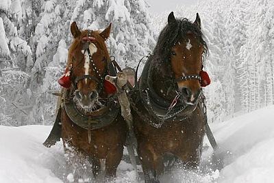 Рабочие лошади зимой