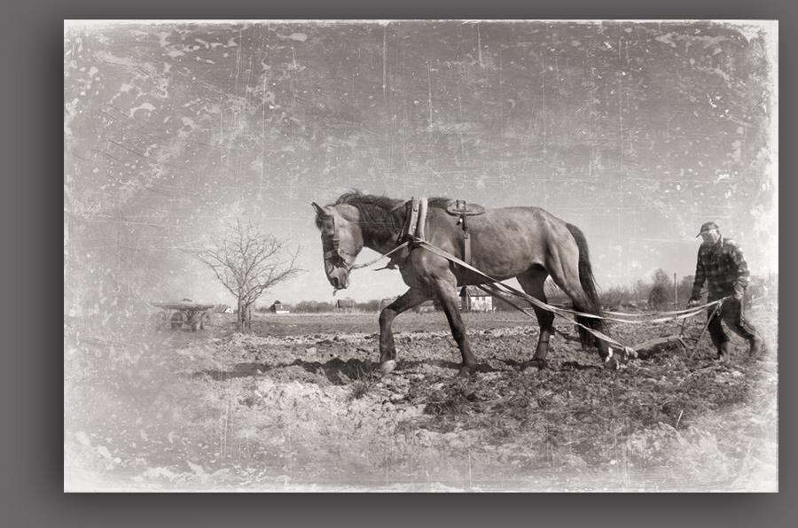 Старая лошадь Билли