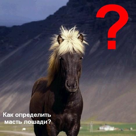 Как определить масть лошади
