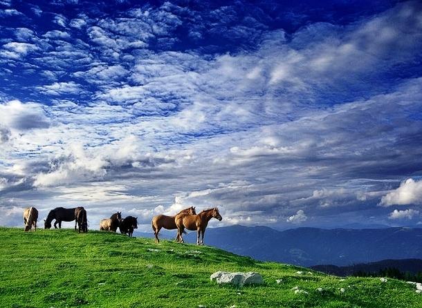 Лошадиная красота на природе