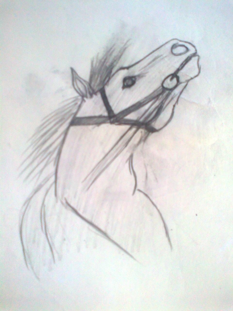 Любительские рисунки лошадей (2)