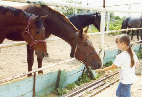 Почему лошадь любит сахар