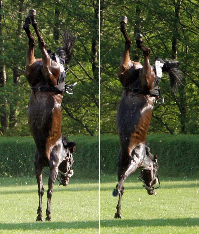 Смешные лошади