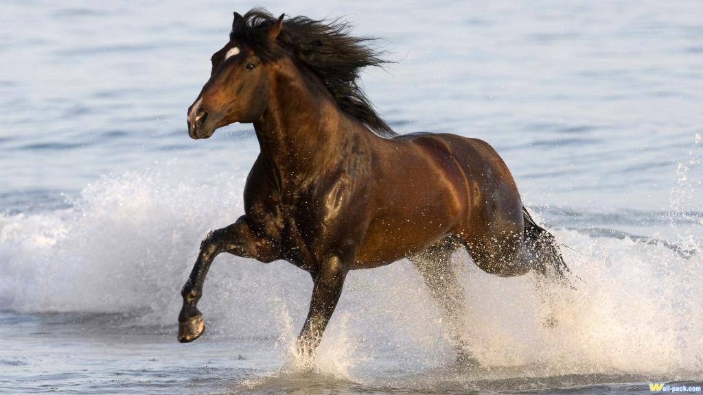 Лошади в воде на фото