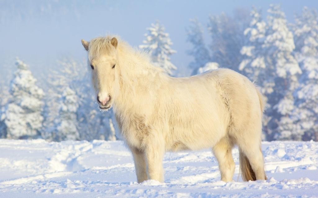 Фотографии лошадей зимой
