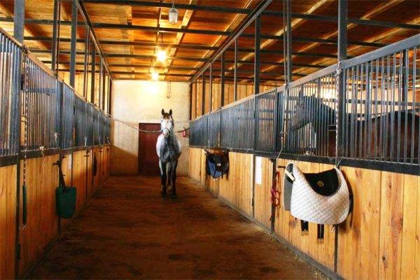 Денники для лошади
