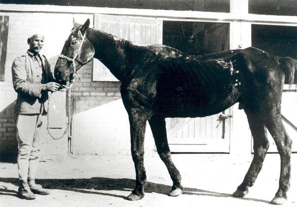 62 летний конь Старый Билли